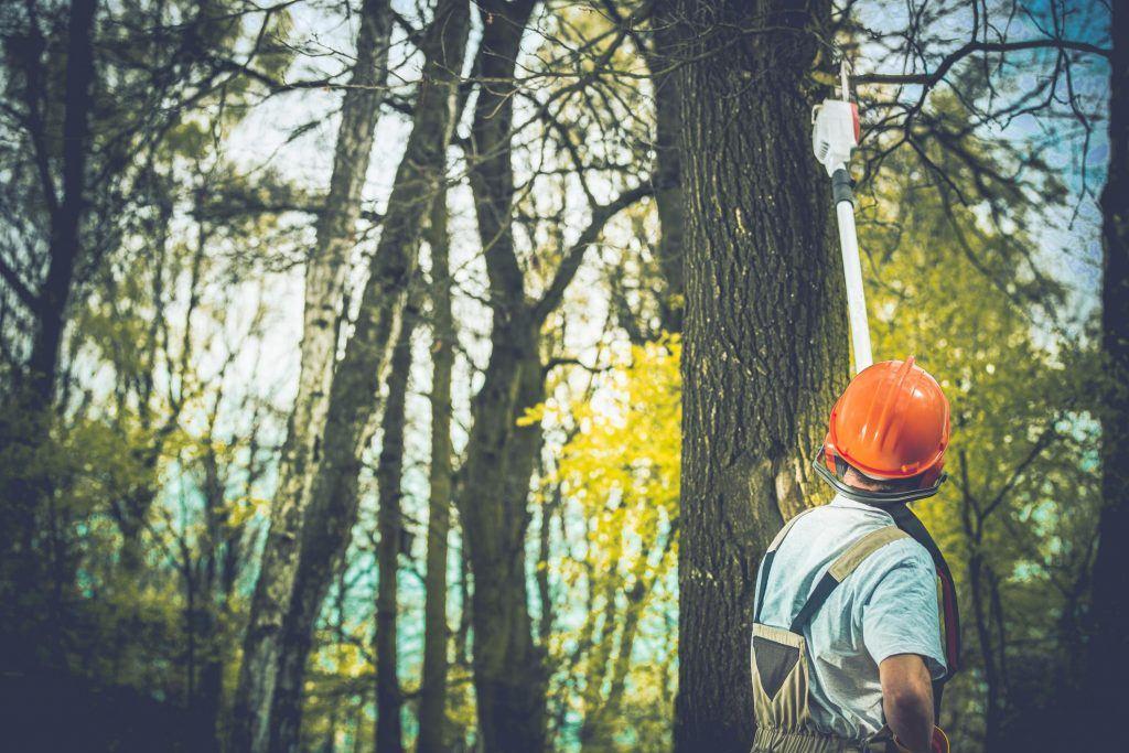 Arborist service hobart