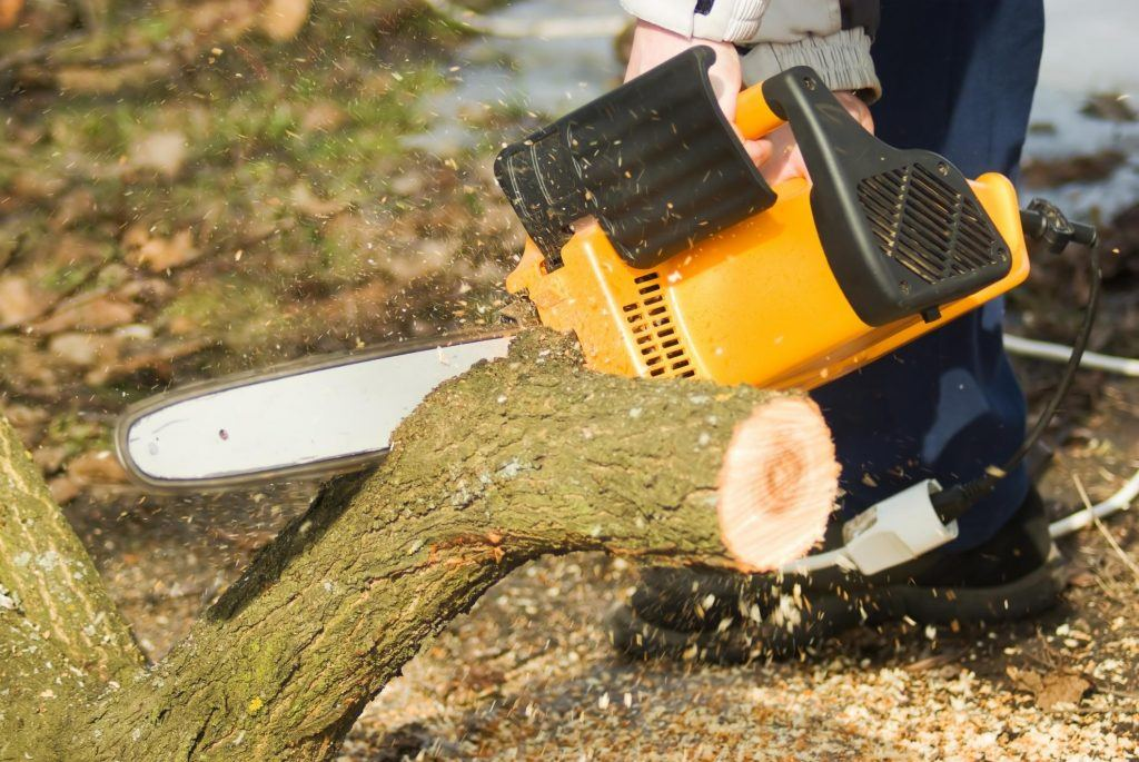 Tree removal chainsaw