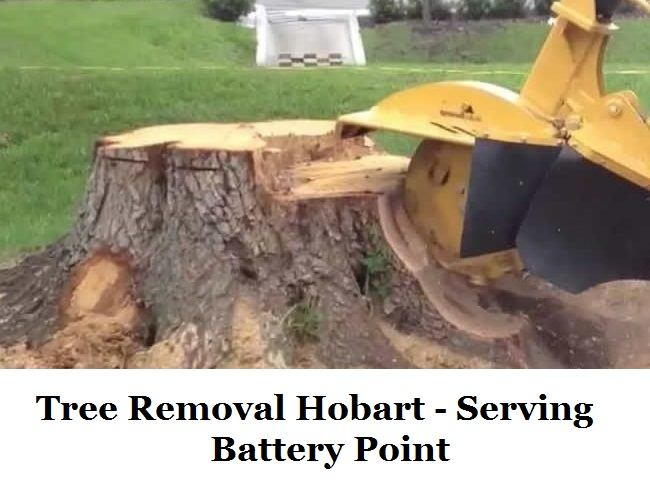 Tree Removal Hobart Battery Point