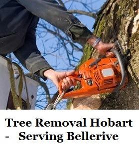Tree Removal Hobart Bellerive