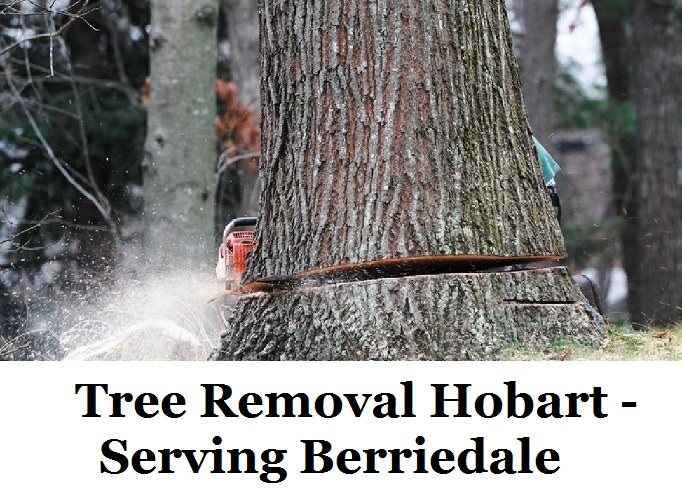 Tree Removal Hobart Berriedale