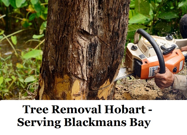 Tree Removal Hobart Blackmans Bay
