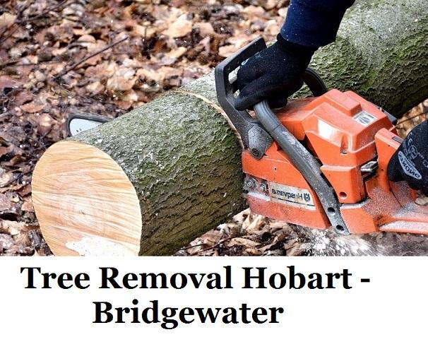 Tree Removal Hobart Bridgewater