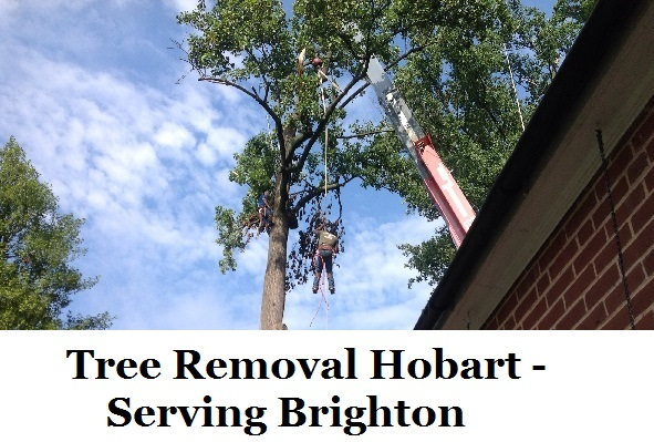 Tree Removal Hobart Brighton