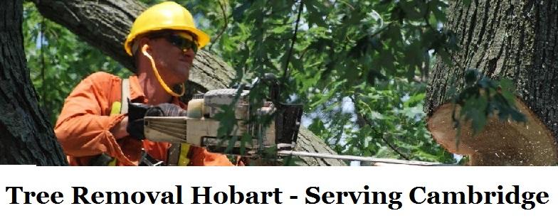 Tree Removal Hobart Cambridge