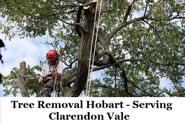 Tree Removal Hobart Clarendon Vale