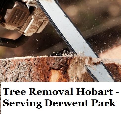 Tree Removal Hobart Derwent Park