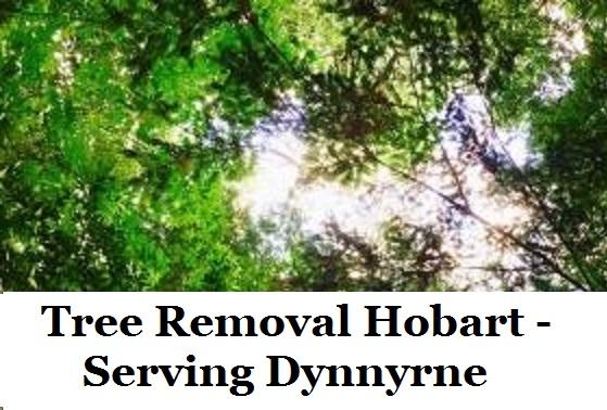 Tree Removal Hobart Dynnyrne