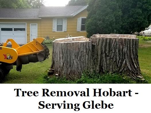 Tree Removal Hobart Glebe