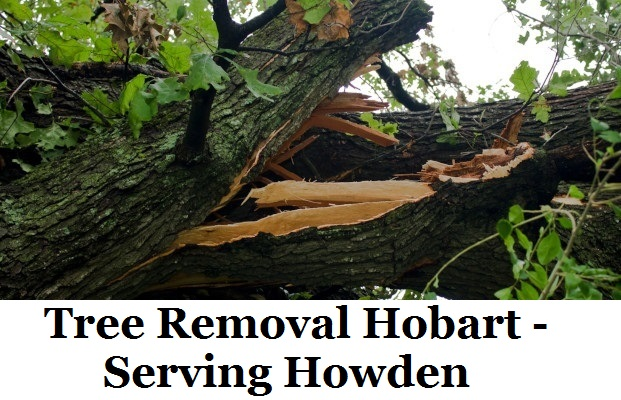 Tree Removal Hobart Howden