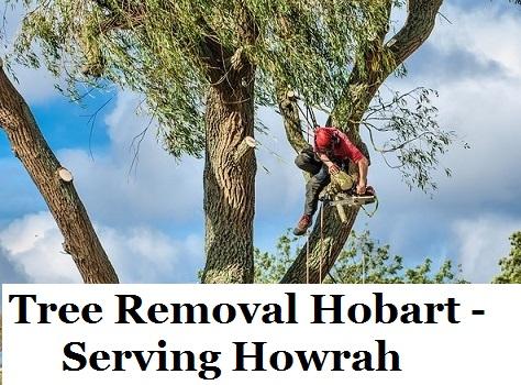 Tree Removal Hobart Howrah