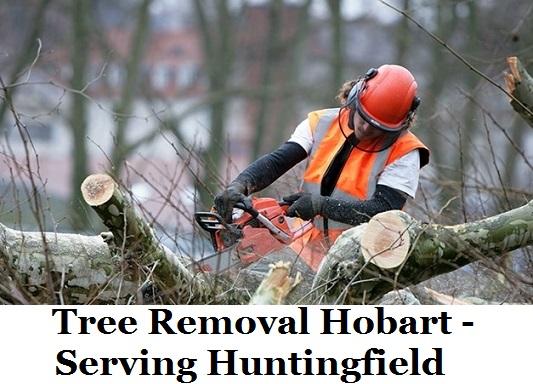 Tree Removal Hobart Huntingfield