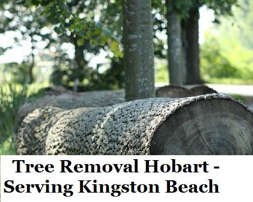 Tree Removal Hobart Kingston Beach