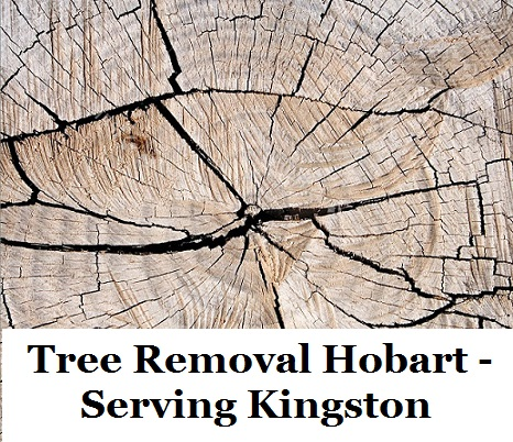 Tree Removal Hobart Kingston