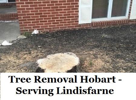 Tree Removal Hobart Lindisfarne