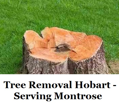 Tree Removal Hobart Montrose