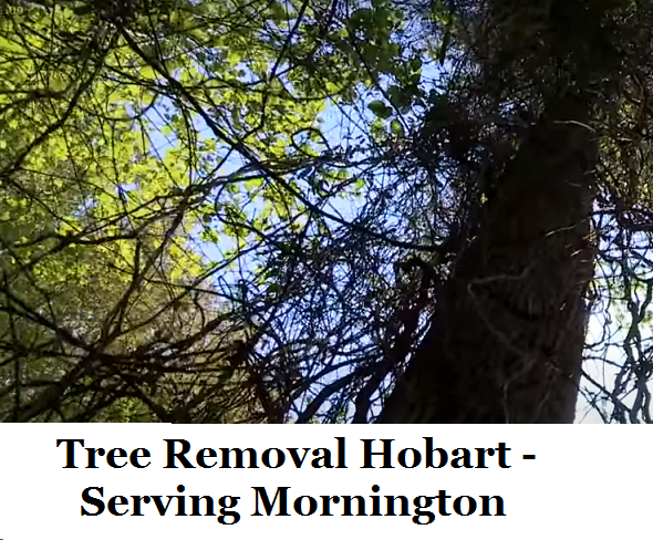 Tree Removal Hobart Mornington
