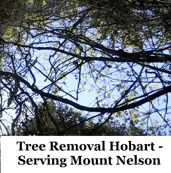 Tree Removal Hobart Mount Nelson