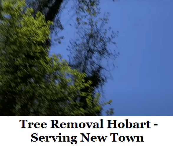 Tree Removal Hobart New Town