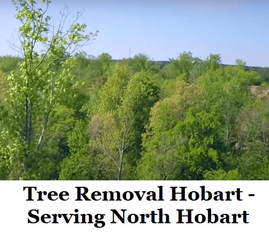 Tree Removal Hobart North Hobart
