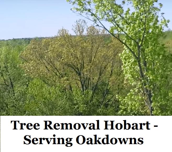 Tree Removal Hobart Oakdowns