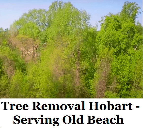Tree Removal Hobart Old Beach