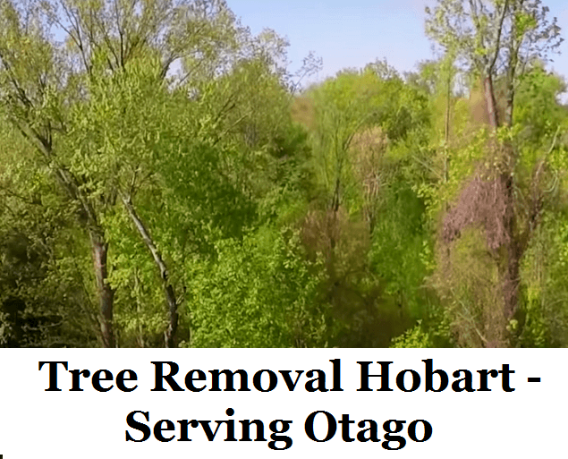 Tree Removal Hobart Otago