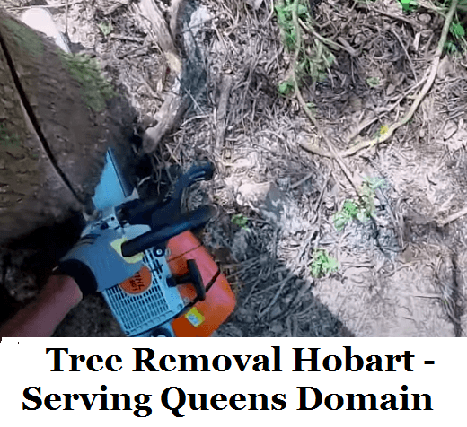 Tree Removal Hobart Queens Domain