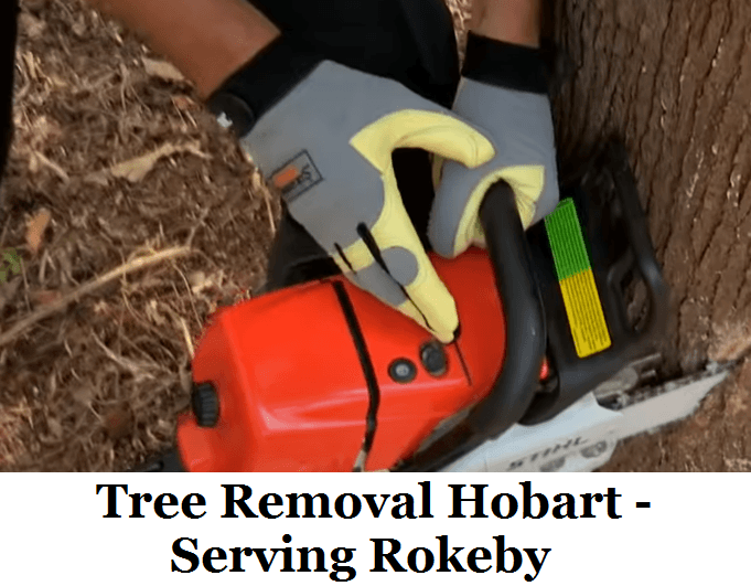 Tree Removal Hobart Rokeby