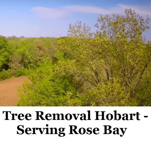 Tree Removal Hobart Rose Bay