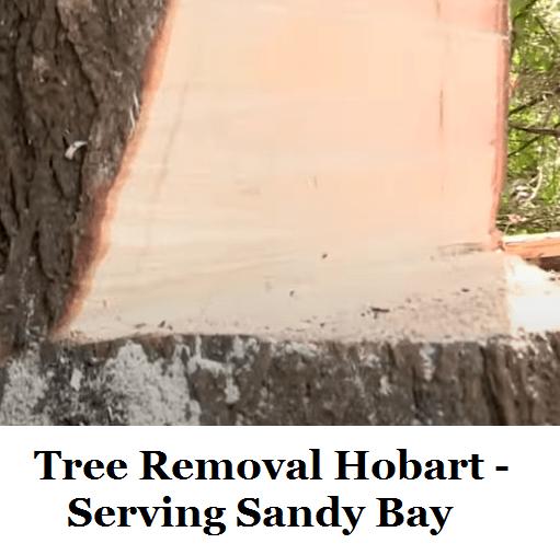 Tree Removal Hobart Sandy Bay