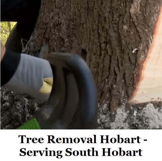 Tree Removal Hobart South Hobart