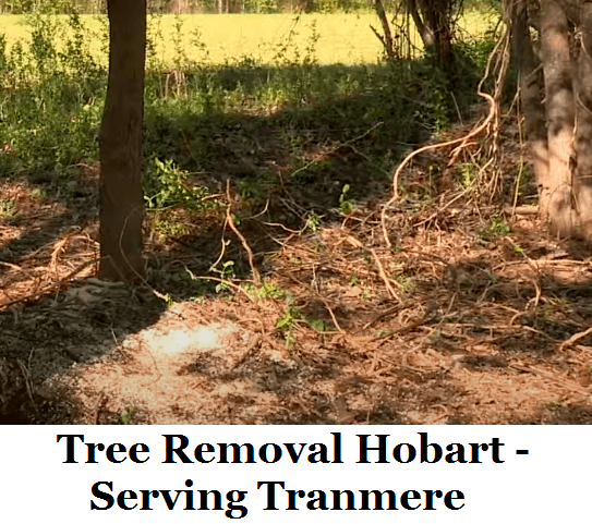 Tree Removal Hobart Tranmere