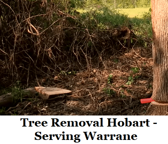 Tree Removal Hobart Warrane